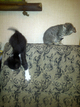 Наши котята подросли и ищут друзей.